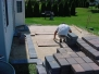 Paver Patio in East Windsor, NJ